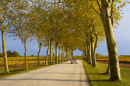 car driving by the autumn lane at the sunset Stock Photo - 3945941