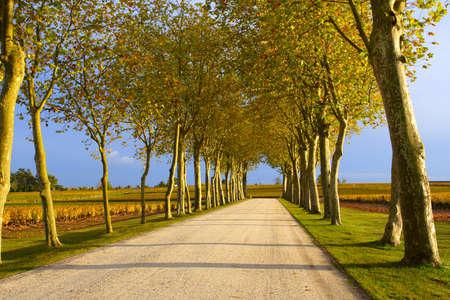 autumn lane leading to the vineyard  photo