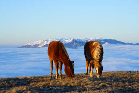 two horses on a pasture at the sunrise time