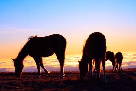 four horses on a pasture on a cloudy mountains background