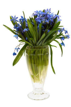 vase with spring flowers isolated on a white  photo