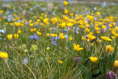 meadow with multicolored flowers   photo