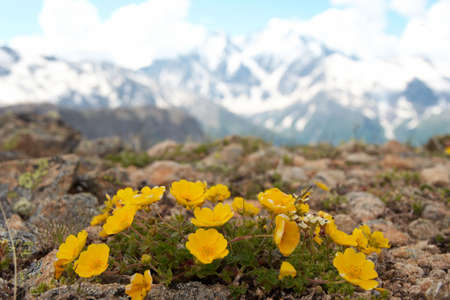 yellow flowers and mountains with blue cloudy sky in the background  photo