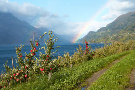 earth road: Apple-alberi e terra road in primo piano e montagne con arcobaleno in lontananza, Norvegia   Archivio Fotografico