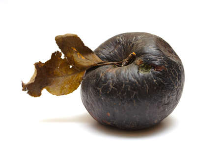 putrid: black rotten apple isolated on a white background  Stock Photo