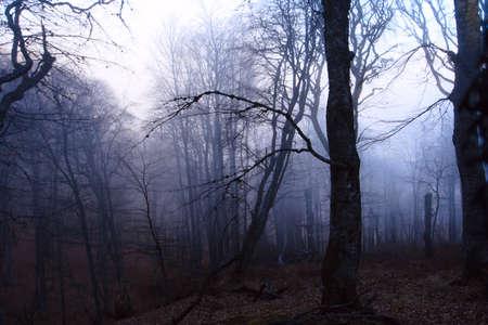 forêt mystérieuse avec les arbres couverts par le brouillard