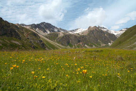 meadow with yellow flowers and mountains in the background  photo