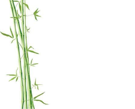 brushes of green bamboo with leaves isolated on a white with copyspace