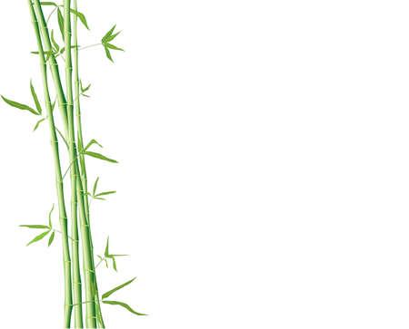 formes de bambou vert avec feuilles isolées sur un blanc avec atelier