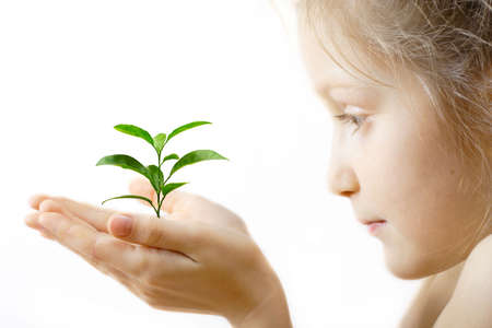 seedling: child holding a sprout at her hands on a white background  Stock Photo