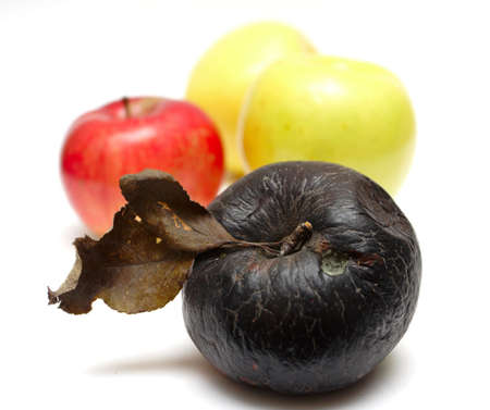rotten apple at the row of fresh apples isolated on a white.   Stock Photo