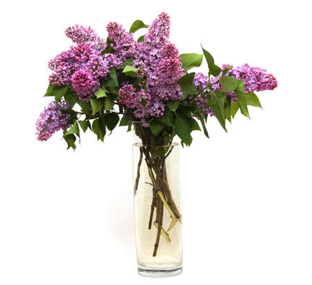 pink lilac bouquet isolated on a white background  photo