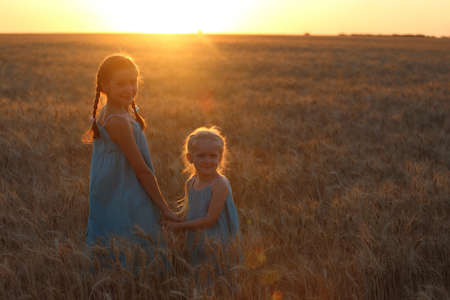 young girls joys on the wheat field  at the sunset time  photo