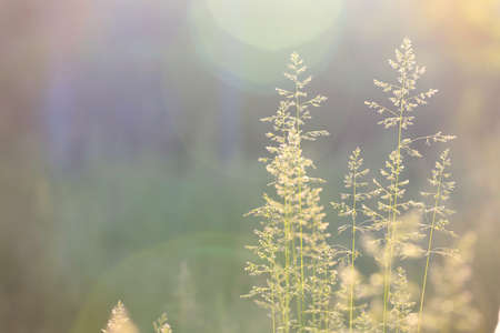 abstract grass background with sun beams illuminating at the camera photo