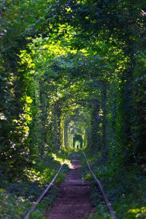tunnel of Love at the Ukraine  Stock Photo