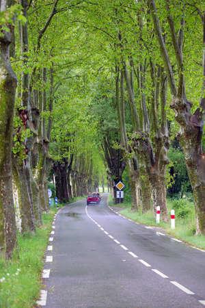 arles: road at the provence, france