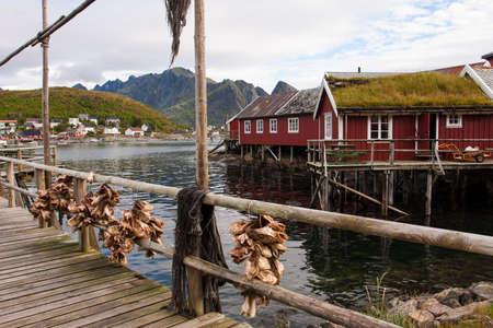 rorbu: dry cod fish and red Lofoten rorbu huts
