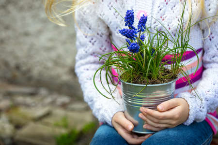 hyacinths: girl holding flowers hyacinths  in a pot Stock Photo