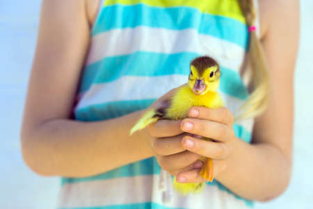 duckling: smiling little girl holding a little duckling