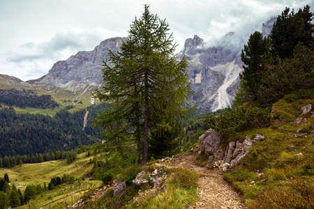hiking trail in the mountains Dolomites, Italy. San Martino di Castrozza