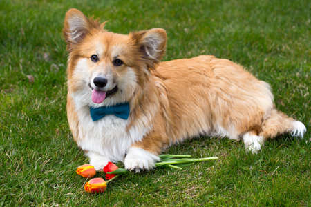 dog with the flower lying on a grass