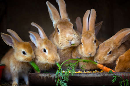 Rabbit and small rabbits eat carrots