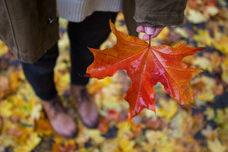 autumn mood - teen girl holding a red maple leaf in her hand