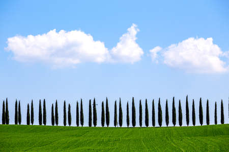 TUSCANY, ITALY APRIL 6, 2017: view of the view of  typical Tuscan landscape with cypress avenues. TUSCANY, ITALY, Aprilr 6, 2017