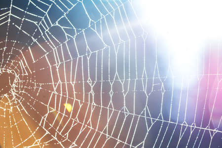 Spider web with drops of dew - abstract background Stock Photo