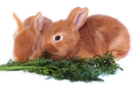 Redhead little rabbit and carrot Imagens