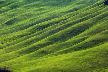green waves. typical Tuscan landscape - a view of a hill and green fields at sunny day. province of Siena. Tuscany, Italy
