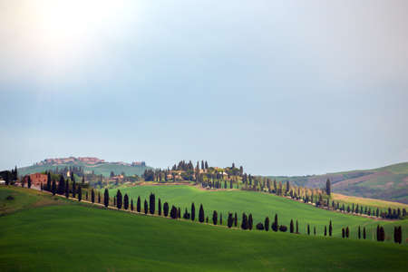 tuscany landscape with cypress alley at sunny day. Tuscany, Italy Stockfoto - 118431598