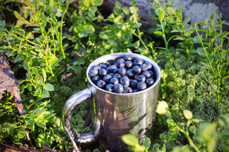 natural antioxidant  cup of blueberries. forest 스톡 콘텐츠