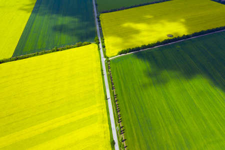 aerial view yellow blooming rapeseed field and wheat field. beautiful landscape