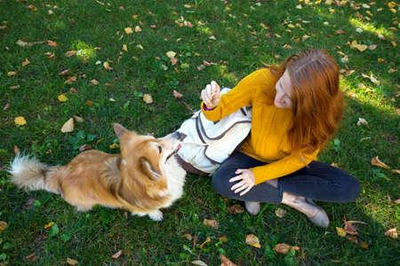 training - girl and dog corgi walking in the park Banco de Imagens