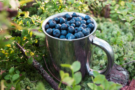 hiking in the mountains. cup of blueberries