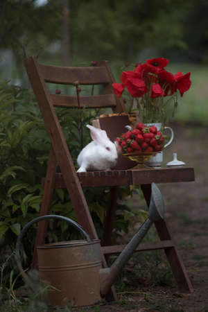still life - vase with poppies, strawberries and rabbit on a vintage wooden chair in the garden. atmosphere and mood