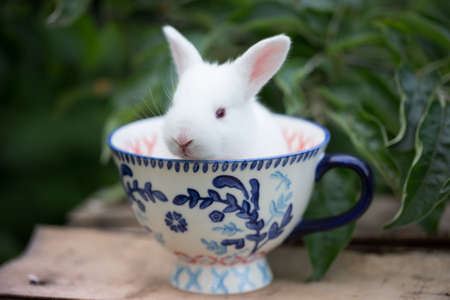 little beautiful white rabbit  at the cup in the garden