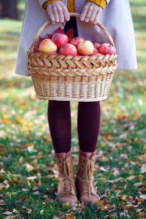 the girl holds  basket  with juicy apples in a in the garden Stock Photo
