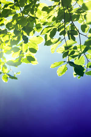 magical frame from the leaves of a tree. beautiful background