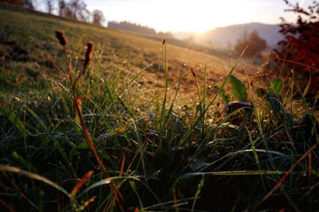 morning in the mountains. grass with dew drops and dawn in the background