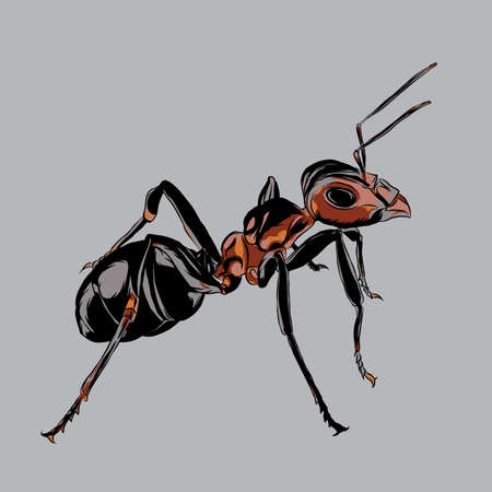 Ant : This design depicts an ant, has a theme of animals.