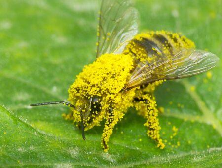Bee stick round flower pollen, image