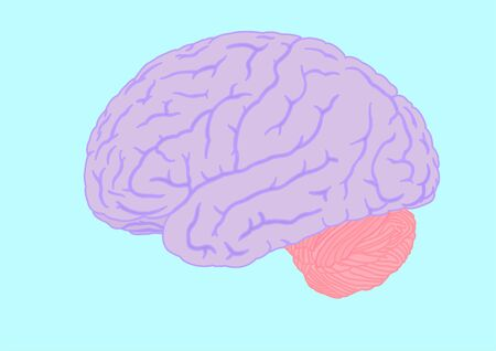 sulcus: human brain silhouette, vector illustration Illustration