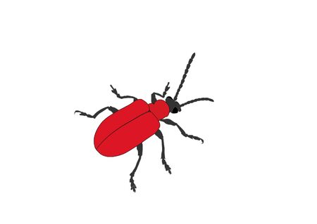 feeler: red bug