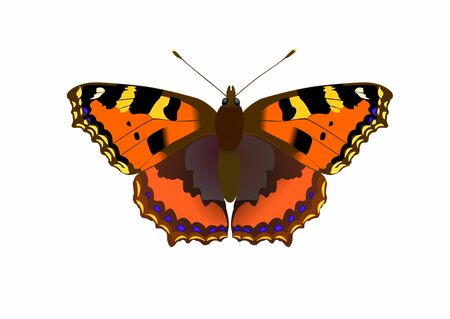 Nymphalis utricae butterfly, vector illustration Vector