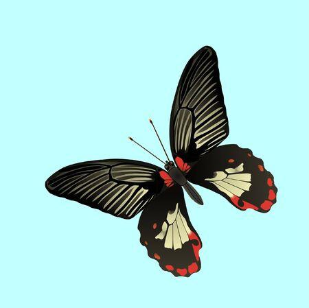 tropic butterfly, vector illustration Vector