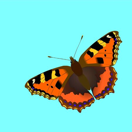 Nymphalis utricae butterfly, vector illustration