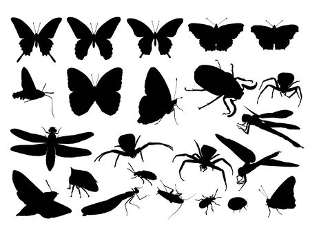 butterfly ladybird: silueta de insectos y la ara�a negra, ilustraci�n  Vectores