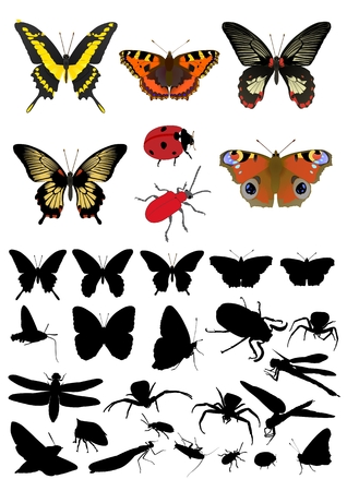 insect picture and silhouette set for design,  illustration Illustration